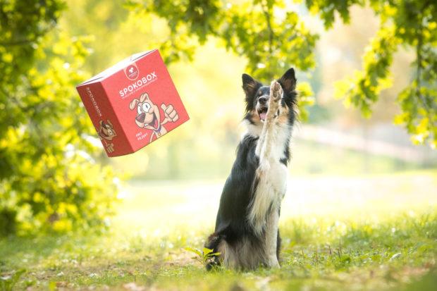 Spokojený pes představuje obalovou novinku